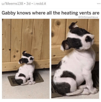 "Af, Anaconda, and Asian: u/Meems138 3d i.redd.it  Gabby knows where all the heating vents are  @DrSmashlove So one of my followers DMed me from China talmbout ""smash you talked about big girls and you talked about thicky thicc girls ... what about small girls?"" Well baby girl I'm glad u asked. Now see a lot of American men got a lil diminutive, subservient Asian girl geisha type fetish. Bruv 😤...STOP IT WITH THAT SH!T YALL GROSS 😂. And what I love most is they wife a Asian girl and she gon turn his COT DAMN life upside down because lo and behold! Asian girls are aggressive AF 🤗😂. Underneath that modest frame and chill demeanor is a fire breathing dragon - it's all fun and games till u wife her up and find out that just like the skinny Somalian dude in the tom hanks movie...she da captain now lmao. They don't call them ""Tiger Moms"" for nothing! Naw I ain't about no damn racist fetishes. I love u lil Asian girls because the fact is, y'all make the best dinner companions bc y'all dainty! Y'all barely eat! Y'all just nibble! It's so adorable! LMFAO JK YALL EAT LIKE LIONS WHO ARE BEING STARVED BEFORE FIGHTING A WARRIOR IN A ROMAN COLISEUM AND YALL AINT SEEN FOOD FOR TWO DAYS BEFORE THE MATCH THAT'S HOW YALL EAT 😂. If u ain't seen this sh!t bruv, it's a thing of wonderment. I honestly am astonished every time. U lil Asian girls bruv I don't een know where the food go...Is your chest cavity comprised entirely of stomach? 😂 Four tacos, half a burrito, and u scraping the bottom of the guacamole bowl? I SEENT IT 😂. Dated this one girl bruv half Asian half white 5'7"" UNDER 100 LBS we went to Kuma's which serve burgers the size of volleyballs she bodied it, bodied the waffle fries and we got fro yo after. Nah. Hell nah. To keep up with a Asian girl bruv u need a second mortgage. Fvck around and redo ya whole dating budget. Food (per month): $10,000 (for the lion dragon Monster). 😂 FR tho I love u lil Asian girls. Fvck around and leave me dead broke off of four dates but it's worth it, my body is ready. SMASH LOVES ALL BODY TYPES THICC AND THIN BIG AND SMALL I'M WARNING YALL THO THE LIL ONES AIN NOTHING TO EFF WITH FINANCIALLY BLESS UP 😍😂😂😂"