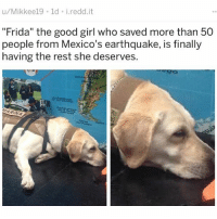 "Af, Bae, and Boner: u/Mikkee19 1d i.redd.it  ""Frida"" the good girl who saved more than 50  people from Mexico's earthquake, is finally  having the rest she deserves.  Cerre  HARIA FIRST FRIDA KAHLO THE SEXY ARTIST WITH THE UNIBROW AND CONFUSED BONER MUSTACHE AND NOW FRIDA THE EXKREMELY GOOD GIRL HERO RESCUE DOG I DON'T THINK ANY MORE EVIDENCE IS REQUIRED THAT GIRLS NAMED FRIDA ARE BAE AF WhereMyFridaAt SomebodyFindHer 😍😂😂😂"