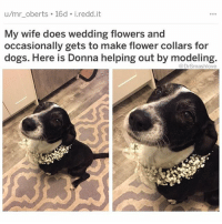 "Beard, Bless Up, and Cookies: u/mr oberts 16d i.redd.it  My wife does wedding flowers and  occasionally gets to make flower collars for  dogs. Here is Donna helping out by modeling  @DrSmashlove Today I have reached the high point of my career, bruv. No I did not get a promotion. Nor did I get a raise. Did my title change? Also no. Corner office? No ma'am (thankfully my office-view is pretty dope as it is and for that I am thankful 🤲). Head of a group? Nuh uh. Something sweeter. Something more valuable. Something nearer and dearer to my heart. Today, dear friends, when the food services people (who are the real MVPs) set up my business lunch in the conference center (chicken breasts, fingerling potatoes, Brussels sprouts, salad, rolls and cookies...side note...fingerling? LMAO. Who invented this word? It's like the daintiest, most petite finger. ""Alice has the most adorable hands. They're not even fingers...they're fingerlings 🤗."" But I got big hands so what that make me? ""Smash got bear paws, bruv. He ain't een got fingers, he got 'Fingertons'"" 😩 ok imma donkey lemme stop). So anyway when I get to the room and they had lunch set up...THEY ALREADY PUT THE TABASCO AND SRIRACHA OUT THERE FOR ME 😥. I was so happy I was damn near beaming. A lump formed in my throat and a single tear trickled down my low, shaped beard. No more walk of shame to the supplies closet where they hide the seasonings so some of our more Caucasoidally-inclined clients don't sustain any inadvertent burns (caucasoids I love yall and I know some of u are bout that spicy lifestyle but some of u might damn near cough out a lung out if we keeping it 600 lol.) The staff had my back. They knew that these negotiations are tough when I attempt to choke down a completely unseasoned chicken breast, as my esophagus will sometimes reject food that hasn't been bathed in at least two or three different hot sauces. Today's negotiation went wonderfully. I felt like I was skipping about the room in a tutu lmao pause. Anyway I feel like it's not much more for me to do out here, bruv. I always felt like an outsider in this corporate ting, but today...I still feel like an outsider 🤗 LMAO BUT THEY HAD MY BACK WITH THE HOT SAUCE AND IMMA REMEMBER THIS DAY FOREVER. NEVER LOSE SIGHT OF THE LITTLE WINS. MamaWeMadeIt BLESS UP 🤗😂😂😂"