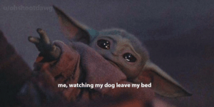 Crying Cat with Baby Yoda, their powers combined: u/ohshootdawg  me, watching my dog leave my bed Crying Cat with Baby Yoda, their powers combined