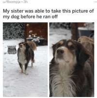 (@boywithnojob) is one of the few truly awesome meme pages!: u/Roompje. 3h  My sister was able to take this picture of  my dog before he ran off (@boywithnojob) is one of the few truly awesome meme pages!