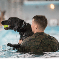 Memes, North Carolina, and Pool: U.S. Marine Corps photo by Cpl. Austyn Saylor) Lance Cpl. Colin McAninch, a 2nd Law Enforcement Battalion military working dog-handler assists his dog Breeze out of a pool at Marine Corps Base Camp Lejeune in North Carolina. proudamerican🇺🇸