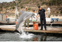 Memes, Dolphin, and Fish: U.S. Navy photo by Lt. Matthew A. Stroup/Released Photo of the Day: Royal New Zealand Navy Commodore Tony Millar tosses a fish to a dolphin from the Marine Mammals Systems Project during a visit onboard Naval Base Point Loma.
