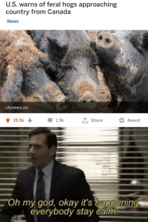 God, News, and Oh My God: U.S. warns of feral hogs approaching  country from Canada  News  ctvnews.ca  T, Share  15.5k  1.9k  Award  Oh my god, okay it's happening  everybody stay calm. THE OINKENING
