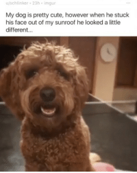 🐕➕🚗=👹 dogsofreddit dogsofinstagram dogsofredditoninstagram: u/schlinker 23h imgur  My dog is pretty cute, however when he stuck  his face out of my sunroof he looked a little  different... 🐕➕🚗=👹 dogsofreddit dogsofinstagram dogsofredditoninstagram