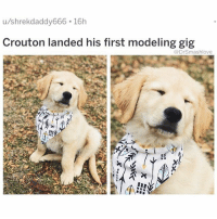 "Af, Beautiful, and Bless Up: u/shrekdaddy666 16h  Crouton landed his first modeling gig  @DrSmashlove  xi THIS IS MY SECOND CROUTON POST AND I'M LOW KEY IN LOVE WITH THIS LIL BUG BUT I'D LIKE GO ON RECORD AND SAY I DON'T LIKE ACTUAL CROUTONS NOBODY NEED ALL THEM CARBS IN A SALAD IF HE WERE MY BB I WOULD CALL HIM ""Mixed Greens with Dates, Almonds and Goat Cheese"" WHICH ARE MUCH MORE DELICIOUS AND APPROPRIATE SALAD ACCOUTREMENTS AND YES I SAY ""accoutrements"" WITH A FRENCH ACCENT LIKE ""accoot-ghe-MAW"" BC IT MAKE ME FEEL FANCY AF EVEN THO I'VE NEVER BEEN TO FRANCE AND MY ONLY EXPOSURE TO FRENCH CULTURE HAS BEEN A TRIP WITH THE HOMIES TO MONTREAL (side note: extremely lit city with beautiful people) THIS CAPTION IS NONSENSE IT'S BEEN A LONG WEEK BLESS UP 🥗🤗❤️😍😂"