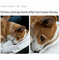 "Af, Bae, and Love: u/SlimThick14 3d imgur  Smiles coming home after hurricane Harvey Love this pup's expression tho: ""when u mad at bae but then bae wanna take u out for sushi so u make a deal with yourself to be civilized for two hours - just enuf time to consume four delicious rolls stuffed with yellow tail, fatty tuna, tempura shrimp, soft shell crab and other tasty treats before acting bratty AF for the rest of the night and part of the next morning"" iLoveItTho 🤗😂😂😂"