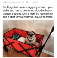 Bless Up, Funny, and Life: u/SophiaLongnameovich 24d. i.redd.it  So, Hugo has been struggling to keep up on  walks and has to be carried alot. Got him a  wagon. Set it up with a memory foam pillow  and a spot for water bowls. 'cause priorities. I AM EITHER SUFFERING WRITER'S BLOCK OR I AM NO LONGER FUNNY ONE OF THE TWO LET'S HOPE IT'S THE FORMER AND NOT THE LATTER IN THE MEANTIME ENJOY THIS GOOD BOY LIVING HIS BEST LIFE BLESS UP 😍😂😂😂