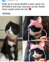 Cute, Memes, and Sad: u/thildreth1 19h  Kitty at our local shelter's ears were cut  off before she was rescued, so her foster  mom made some for her  Cat Picture Sad and cute