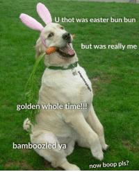 Easter: U thot was easter bun bun  but was really me  golden whole time!!!  bamboozled ya  now boop pls?