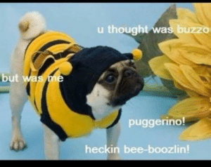 A dump reprieve from selfie day: u thought was buzzo  but was me  puggerino!  heckin bee-boozlin! A dump reprieve from selfie day
