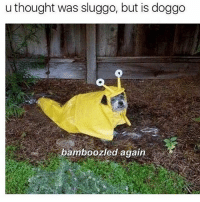 Memes, 🤖, and Doggo: u thought was sluggo, but is doggo  bamboozled again hahaha these heckin disguises are tricky (rp @theworldpolice 👈 the best dog memes!)