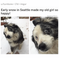 (@hilarious.ted) is the greatest animal meme page on the Gram.: u/turnbone 17d imgur  Early snow in Seattle made my old girl so  happy!  @DrSmashlove (@hilarious.ted) is the greatest animal meme page on the Gram.
