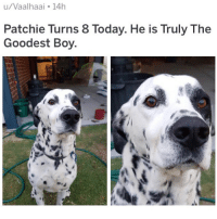 (@hilarious.ted) is the best animal meme page on the Gram!: u/Vaalhaai 14h  Patchie Turns 8 Today. He is Truly The  Goodest Boy (@hilarious.ted) is the best animal meme page on the Gram!