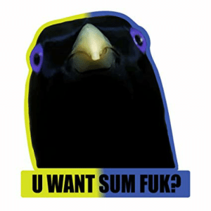 Amazon.com: U Want Sum Fuk? Lemme Smash Bird Internet Meme - Vinyl ...: U WANT SUM FUK? Amazon.com: U Want Sum Fuk? Lemme Smash Bird Internet Meme - Vinyl ...