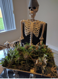 this is mr. weed skeltal. updoot in 420 seconds or you will never inject marijuana leaves again: ua this is mr. weed skeltal. updoot in 420 seconds or you will never inject marijuana leaves again