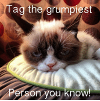 Grumpy Cat, Pusheen, and Cat: Uag the grumpiest  erson you know! In the comments below! :D 