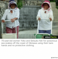 Clothes, Facts, and Instagram: uber  facts  70-year-old women Yoko and Setsuko fish for poisonous  sea snakes off the coast of Okinawa using their bare  hands and no protective clothing.  @UberFacts https://www.instagram.com/uberfacts/