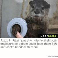 Cute, Facts, and Instagram: uber  facts  A zoo in Japan put tiny holes in their otter  enclosure so people could feed them fish  and shake hands with them  Uber Facts 2015 Cute!!! https://www.instagram.com/uberfacts/