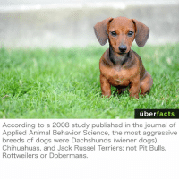 Memes, 🤖, and Journal: uber  facts  According to a 2008 study published in the journal of  Applied Animal Behavior Science, the most aggressive  breeds of dogs were Dachshunds (wiener dogs),  Chihuahuas, and Jack Russel Terriers; not Pit Bulls,  Rottweilers or Dobermans. Oh! https://www.instagram.com/uberfacts/