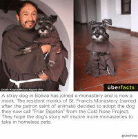 """This dog has become a monk!: uber  facts  Credit: Kasper Mariusz Kapron Ofm  A stray dog in Bolivia has joined a monastery and is now a  monk. The resident monks of St. Francis Monastery (named  after the patron saint of animals) decided to adopt the dog  they now call """"Friar Bigoton"""" from the Cold Nose Project.  They hope the dog's story will inspire more monasteries to  take in homeless pets.  @UberFacts This dog has become a monk!"""