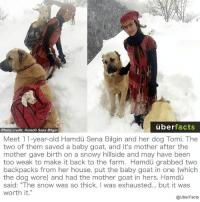 "Memes, Baby Goat, and Baby Goats: uber  facts  Photo credit: Hamdu Sena Bilgin  Meet 11-year-old Hamdu Sena Bilgin and her dog Tomi. The  two of them saved a baby goat, and it's mother after the  mother gave birth on a snowy hillside and may have been  too weak to make it back to the farm. Hamdu grabbed two  backpacks from her house, put the baby goat in one (which  the dog wore) and had the mother goat in hers. Hamdu  said: ""The snow was so thick, was exhausted... but it was  worth it  @UberFacts This is great."
