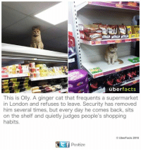 UberFacts: uber facts  This is Olly. A ginger cat that frequents a supermarket  in London and refuses to leave. Security has removed  him several times, but every day he comes back, sits  on the shelf and quietly judges people's shopping  habits.  UberFacts 2016  GEf Postize UberFacts