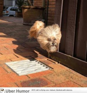 failnation:  When my buddy's dog leaps over grates her body and legs disappear and it looks like a dog's head is just floating down the street.: Uber Humor 20 3 ill no tying ars Instead, blankets with sleeves failnation:  When my buddy's dog leaps over grates her body and legs disappear and it looks like a dog's head is just floating down the street.