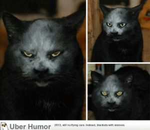 Tumblr, Uber, and Blog: Uber Humor 2013, i no tying ars Instead, blankets with sleeves failnation:  Cat got covered in flour and now looks like a super-villain