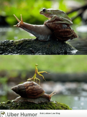 omg-pictures:  Snails: Nature's noble steed.http://omg-pictures.tumblr.com: Uber Humor  Bob Loblaw Law Blog omg-pictures:  Snails: Nature's noble steed.http://omg-pictures.tumblr.com