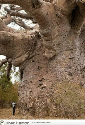 Jesus, Tumblr, and Uber: Uber Humor im arad us blue myelt failnation:  Meet the tree that was here 4000 years before Jesus.