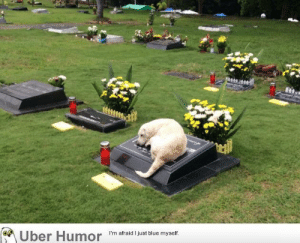 Dogs, Tumblr, and Uber: Uber Humor 'm afraid just biue myet failnation:  Must have been a good human. Dogs are something else.