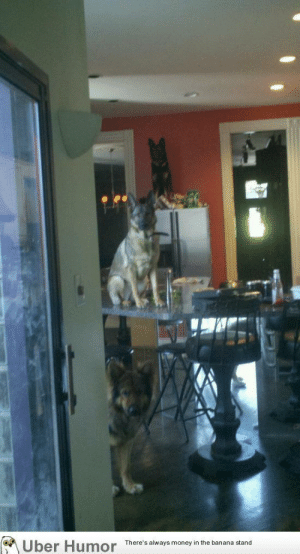 failnation:  Came home from work after letting the dogs roam the house uncrated…: Uber Humor  There's always money in the banana stand failnation:  Came home from work after letting the dogs roam the house uncrated…