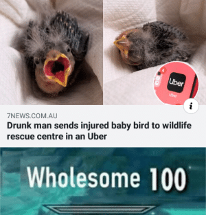 Drunk, Uber, and Wholesome: Uber  Uber  Drunk man sends injured baby bird to wildlife  scue centre in an Uber  7NEWS.COM.AU  Wholesome 100 Wholesome drunk man