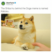 UberFacts  @Uber Facts  The Shiba Inu behind the Doge meme is named  Kabosu. In case you were wondering...
