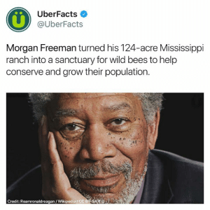 Instagram, Memes, and Morgan Freeman: UberFacts  @UberFacts  Morgan Freeman turned his 124-acre Mississippi  ranch into a sanctuary for wild bees to help  conserve and grow their population  Credit: Reamronaldreagan/Wikipedia/CC BY SA 4.0 I hate bees but this is great 🐝  https://www.instagram.com/uberfacts/