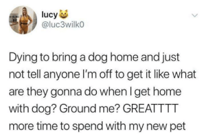When I Get Home: ucy  @luc3wilko  Dying to bring a dog home and just  not tell anyone I'm off to get it like what  are they gonna do when I get home  with dog? Ground me? GREATTTT  more time to spend with my new pet