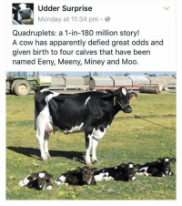 Apparently, Memes, and News: Udder Surprise  Monday at 11:34 pm .  Quadruplets: a 1-in-180 million story!  A cow has apparently defied great odds and  given birth to four calves that have been  named Eeny, Meeny, Miney and Moo. Only news I need https://t.co/ujEN1Aps7N