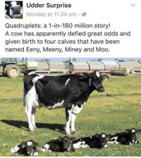 Apparently, Memes, and Monday: Udder Surprise  Monday at 11:34 pm  Quadruplets: a 1-in-180 million story!  A cow has apparently defied great odds and  given birth to four calves that have been  named Eeny, Meeny, Miney and Moo. Perfection