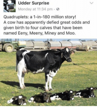 Apparently, Memes, and Butterfly: Udder Surprise  Monday at 11:34 pm  Quadruplets: a 1-in-180 million story!  A cow has apparently defied great odds and  given birth to four calves that have been  named Eeny, Meeny, Miney and Moo. Follow my other accounts @x__antisocial_butterfly__x @lola_the_ladypug ❤️