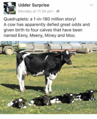 Apparently, Monday, and Been: Udder Surprise  Monday at 11:34 pm  Quadruplets: a 1-in-180 million story!  A cow has apparently defied great odds and  given birth to four calves that have been  named Eeny, Meeny, Miney and Moo