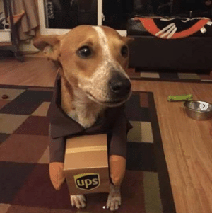 Dogs, Target, and Tumblr: UDS ups-dogs:One last package to deliver!