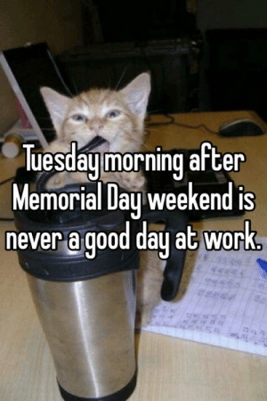 Tuesday morning after Memorial Day weekend is never a good day at work.: uesday morning aften  Memorial Day weekend is  ever a dood dau at wor  never a good day at work Tuesday morning after Memorial Day weekend is never a good day at work.