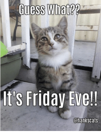 It's Friday, Memes, and 🤖: uess What?  It's Friday Eve!!  Chankscats It's that magical day of the week we like to call Friday Eve!!  The Weekend is right around the corner lovely friends!!  We hope you have an excellent day!  We <3 you all!!  <3