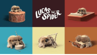 Dank, Spider, and Youtu: (UGA It's official: Lucas is now the world's most musical spider. https://youtu.be/d-guQ3Pki-0
