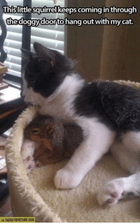 Cats, Memes, and 🤖: Uhislittle squirrelkeepscoming in through  the doggy doorto hang out with my cat.  VIA THEMETAPICTURE.COM Haha..;)