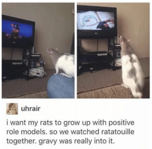Memes, Ratatouille, and Models: uhrair  i want my rats to grow up with positive  role models. so we watched ratatouille  together. gravy was really into it. https://t.co/xWJ9kmTSRk