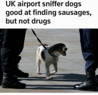 Dogs, Drugs, and Funny: UK airport sniffer dogs  good at finding sausages,  but not drugs Sounds like my kind of dog! Keto FTB!