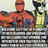 ULTIMATE  ERO FRCTS  Fact #484  WOLVERINE SAYS THAT HE IS ANNOYED  BY BOTH DEADPOOLANDSPIDERMAN  BUT HAS CLAIMED THAT SPENDING TIME  WITH BOTH OF THEMTOGETHERISTHE  WORST PAIN HEHASEVEREXPERIENCED Yuuuupppp...I would have already put my head on a train track, too bad Wolvie is invulnerable lol -- Would you rather spend the day with Deadpool or Spidey?