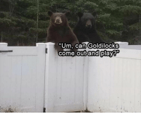 Funny, Animal, and Can: Um, can Goldilocks  come outandiplay Funny Animal Picture Dump Of The Day 23 Pics